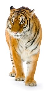 alabama-places-to-visit-02.jpg; tigers for tomorrow alabama