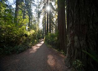 california-national-parks-01; Picture of Redwood National Park