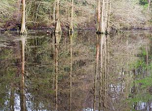 delaware-state-parks-02; Picture of Trap Pond
