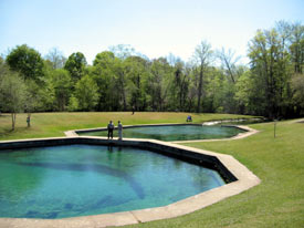 state-parks-in-alabama-02; blue springs state park alabama