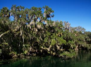 state-parks-in-florida-01; Picture of Blue Springs State Park