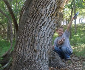 letter-boxing-04; finding a letterbox hidden by a tree