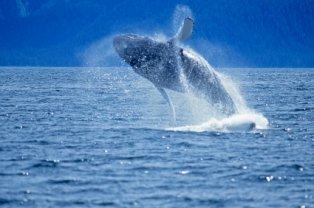 places-to-visit-in-alaska; whale watching tours