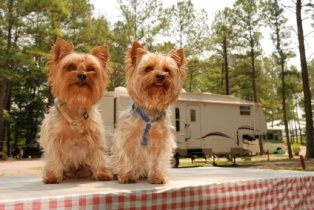rv-campground-reviews-03; two dogs camping with an rv